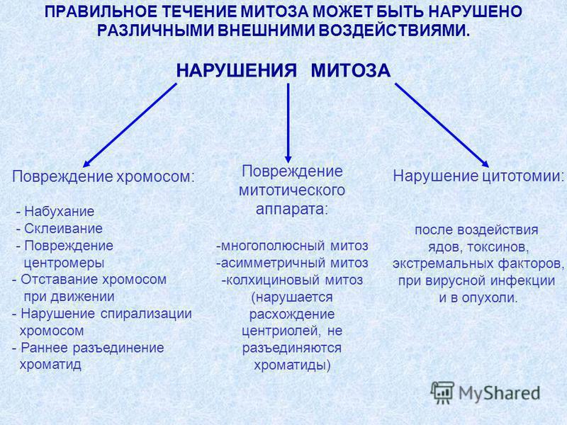 ПРАВИЛЬНОЕ ТЕЧЕНИЕ МИТОЗА МОЖЕТ БЫТЬ НАРУШЕНО РАЗЛИЧНЫМИ ВНЕШНИМИ ВОЗДЕЙСТВИЯМИ. НАРУШЕНИЯ МИТОЗА Повреждение митотического аппарата: -многополюсный митоз -асимметричный митоз -колхицин новый митоз (нарушается расхождение центриолей, не разъединяются