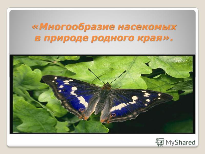 «Многообразие насекомых в природе родного края». «Многообразие насекомых в природе родного края».