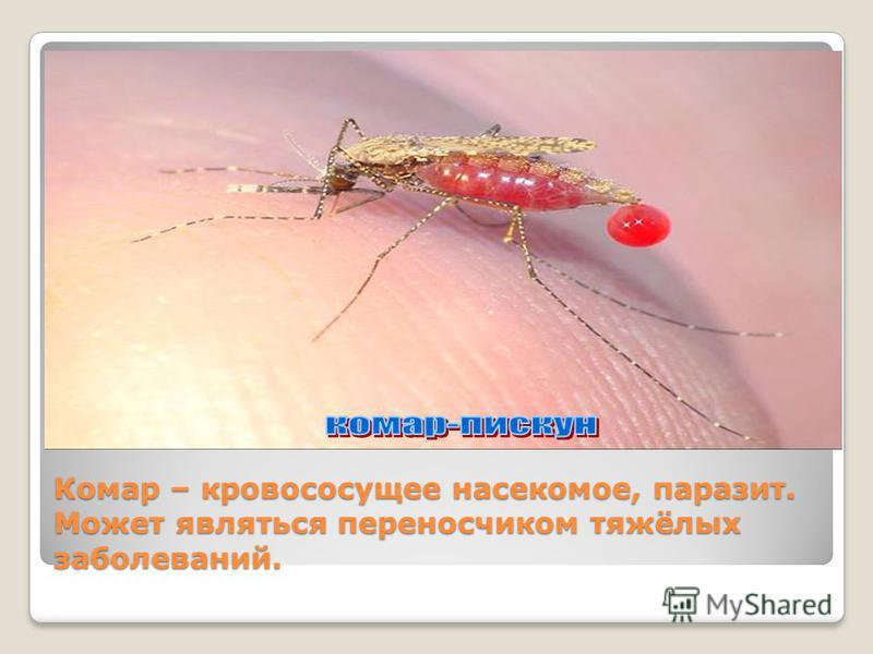 Комар – кровососущее насекомое, паразит. Может являться переносчиком тяжёлых заболеваний.
