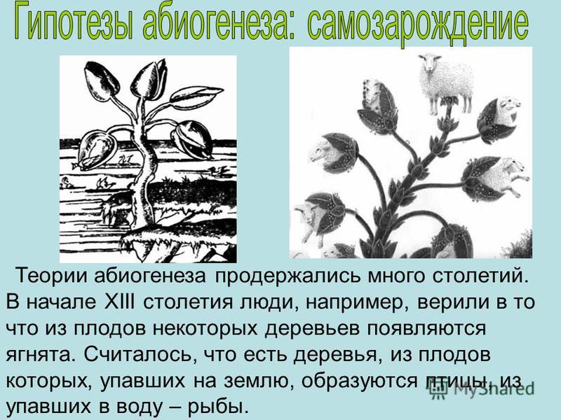Теории абиогенеза продержались много столетий. В начале ХIII столетия люди, например, верили в то что из плодов некоторых деревьев появляются ягнята. Считалось, что есть деревья, из плодов которых, упавших на землю, образуются птицы, из упавших в вод