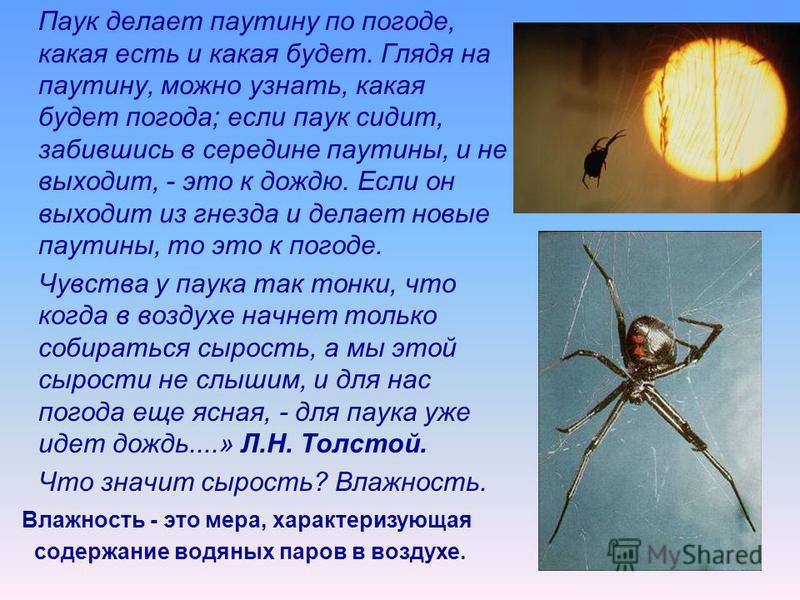 Паук делает паутину по погоде, какая есть и какая будет. Глядя на паутину, можно узнать, какая будет погода; если паук сидит, забившись в середине паутины, и не выходит, - это к дождю. Если он выходит из гнезда и делает новые паутины, то это к погоде