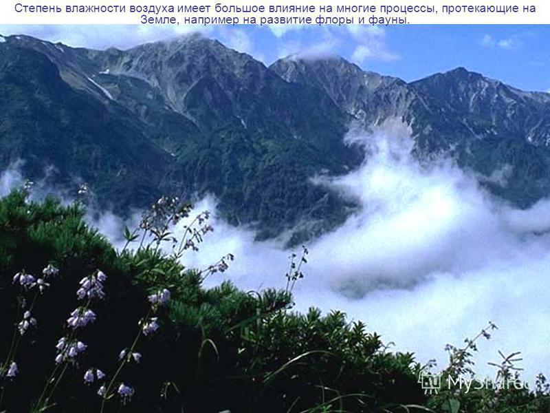 Степень влажности воздуха имеет большое влияние на многие процессы, протекающие на Земле, например на развитие флоры и фауны.