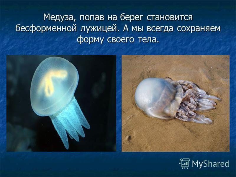 Медуза, попав на берег становится бесформенной лужицей. А мы всегда сохраняем форму своего тела.