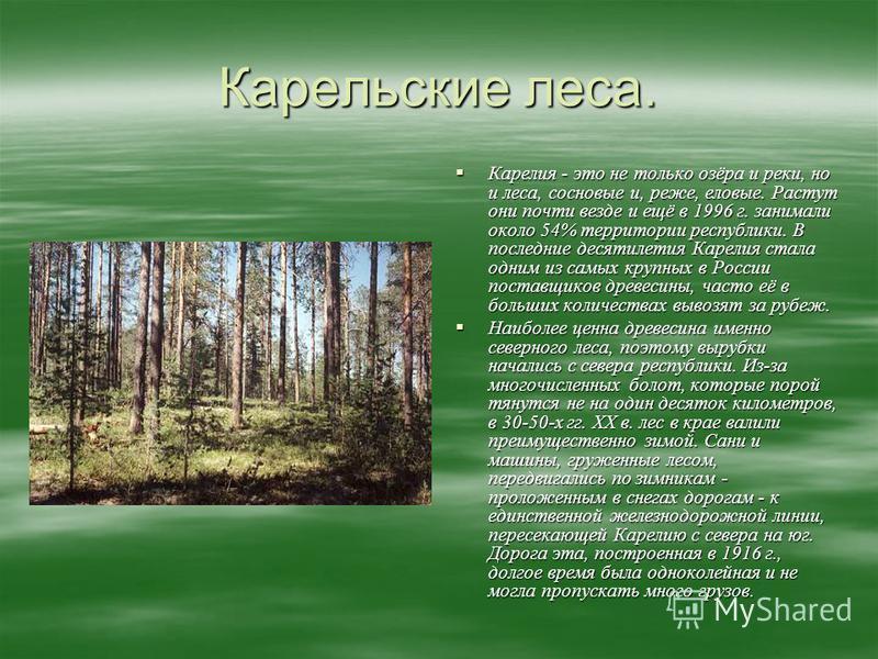 Карельские леса. Карелия - это не только озёра и реки, но и леса, сосновые и, реже, еловые. Растут они почти везде и ещё в 1996 г. занимали около 54% территории республики. В последние десятилетия Карелия стала одним из самых крупных в России поставщ