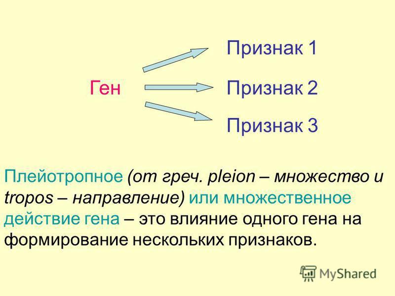 Ген Признак Плейотропное (от греч. pleion – множество и tropos – направление) или множественное действие гена – это влияние одного гена на формирование нескольких признаков. Признак 1 Признак 3 2