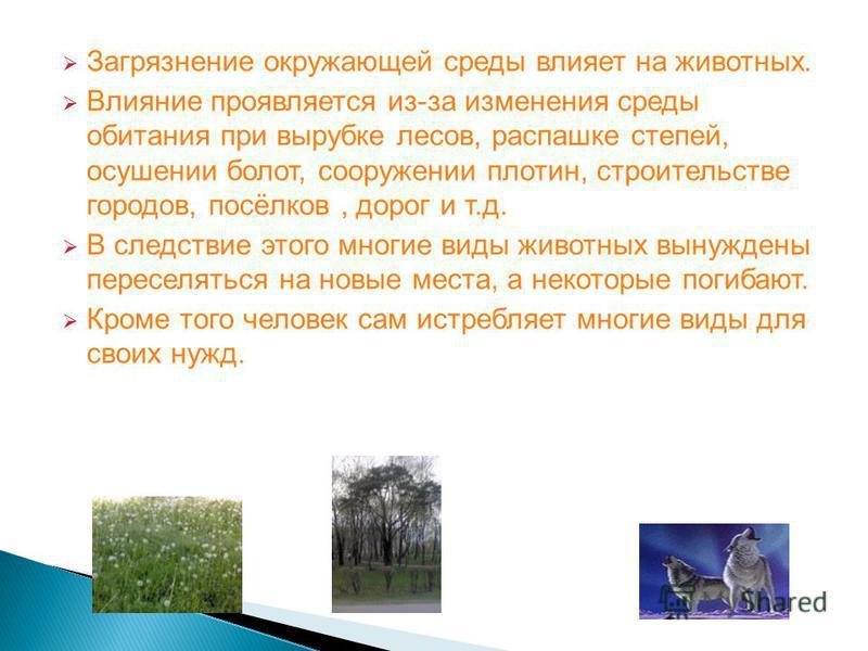 Загрязнение окружающей среды влияет на животных. Влияние проявляется из-за изменения среды обитания при вырубке лесов, распашке степей, осушении болот, сооружении плотин, строительстве городов, посёлков, дорог и т.д. В следствие этого многие виды жив