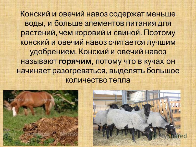 Конский и овечий навоз содержат меньше воды, и больше элементов питания для растений, чем коровий и свиной. Поэтому конский и овечий навоз считается лучшим удобрением. Конский и овечий навоз называют горячим, потому что в кучах он начинает разогреват