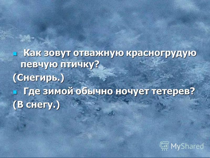 Как зовут отважную красногрудую певчую птичку? Как зовут отважную красногрудую певчую птичку?(Снегирь.) Где зимой обычно ночует тетерев? Где зимой обычно ночует тетерев? (В снегу.)