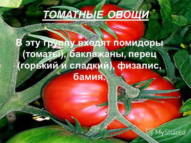 ТОМАТНЫЕ ОВОЩИ В эту группу входят помидоры (томаты), баклажаны, перец (горький и сладкий), физалис, бамия.