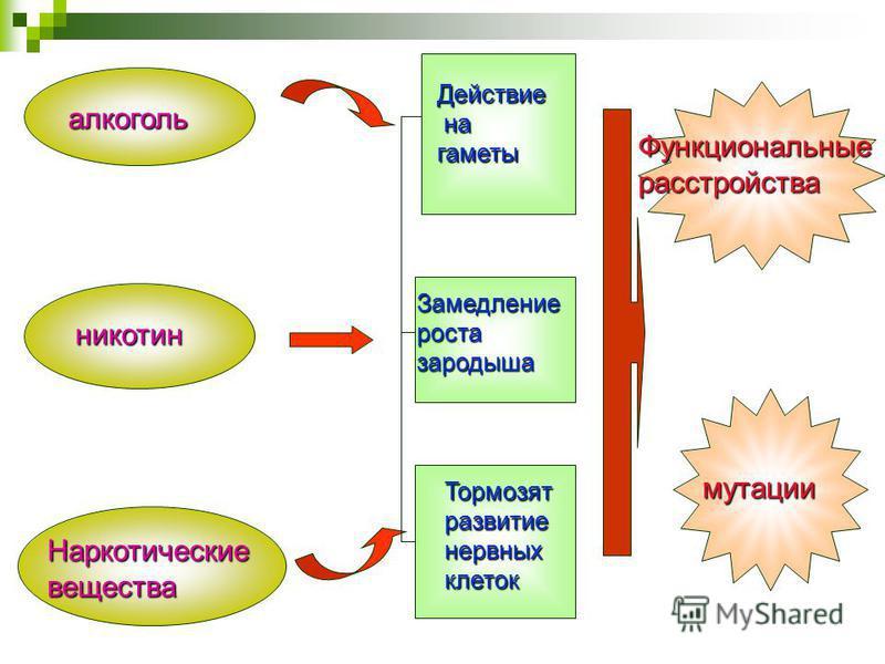 алкоголь никотин Наркотические вещества Действие на на гаметы Замедление роста зародыша Тормозят развитие нервных клеток Функциональные расстройства мутации