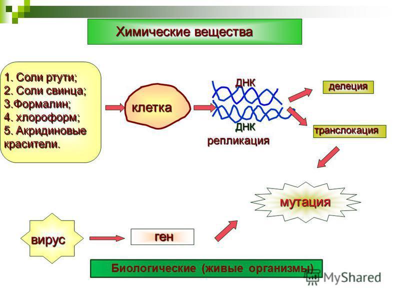 Химические вещества 1. Соли ртути; 2. Соли свинца; 3.Формалин; 4. хлороформ; 5. Акридиновые красители. клетка ДНК ДНК делеция делеция транслокация репликация вирус ген мутация Биологические (живые организмы)