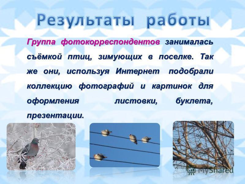 Группа фотокорреспондентов занималась съёмкой птиц, зимующих в поселке. Так же они, используя Интернет подобрали коллекцию фотографий и картинок для оформления листовки, буклета, презентации.