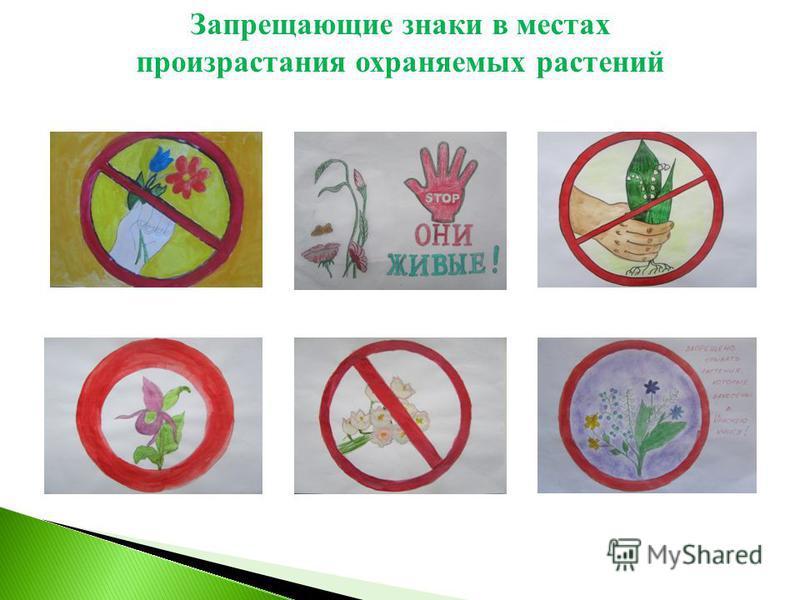 Запрещающие знаки в местах произрастания охраняемых растений