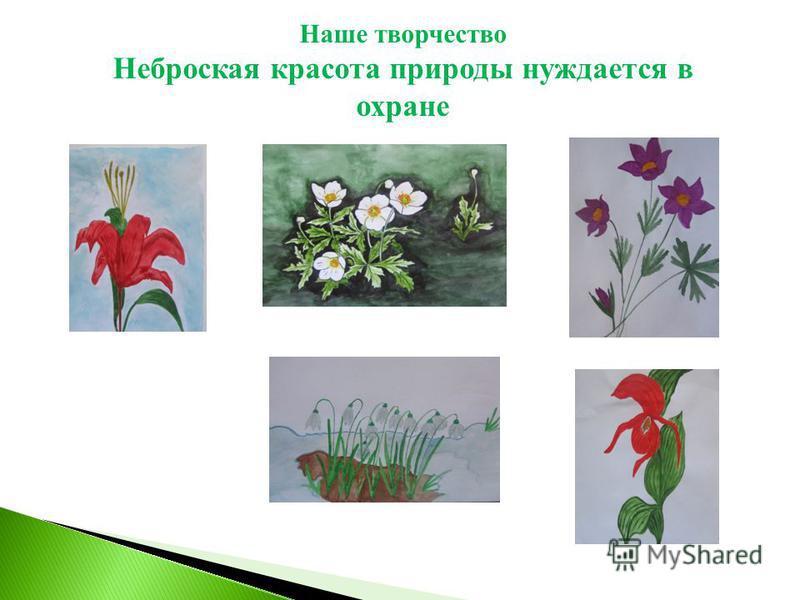 Наше творчество Неброская красота природы нуждается в охране