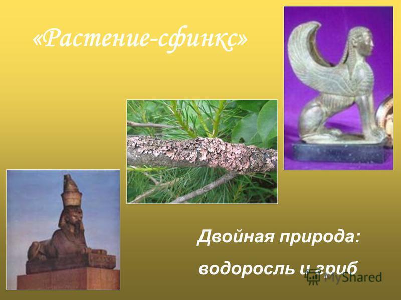 «Растение-сфинкс» Двойная природа: водоросль и гриб
