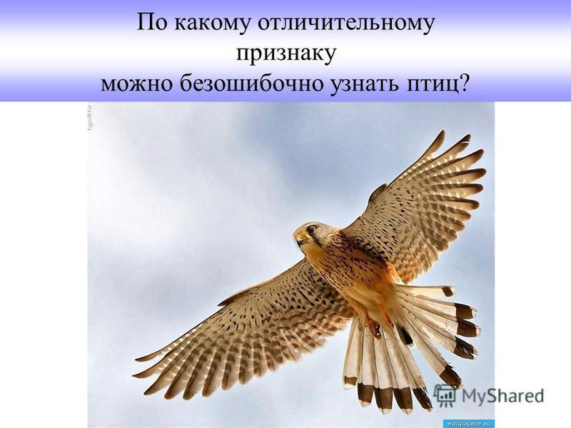 По какому отличительному признаку можно безошибочно узнать птиц?