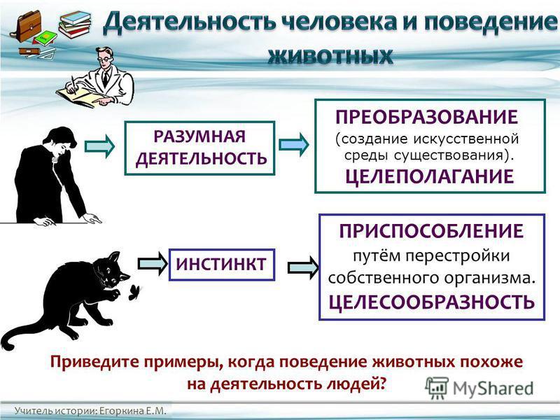 Учитель истории: Егоркина Е.М. Приведите примеры, когда поведение животных похоже на деятельность людей? ИНСТИНКТ ПРИСПОСОБЛЕНИЕ путём перестройки собственного организма. ЦЕЛЕСООБРАЗНОСТЬ РАЗУМНАЯ ДЕЯТЕЛЬНОСТЬ ПРЕОБРАЗОВАНИЕ (создание искусственной с
