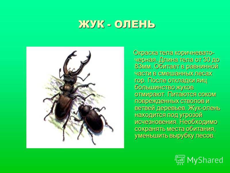 ЖУК - ОЛЕНЬ Окраска тела коричневато- черная. Длина тела от 30 до 83 мм. Обитает в равнинной части в смешанных лесах гор. После откладки яиц большинство жуков отмирают. Питаются соком поврежденных стволов и ветвей деревьев. Жук-олень находится под уг