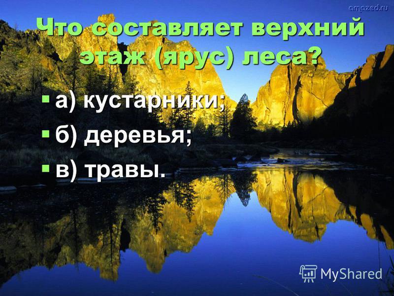 Что составляет верхний этаж (ярус) леса? а) кустарники; б) деревья; в) травы.