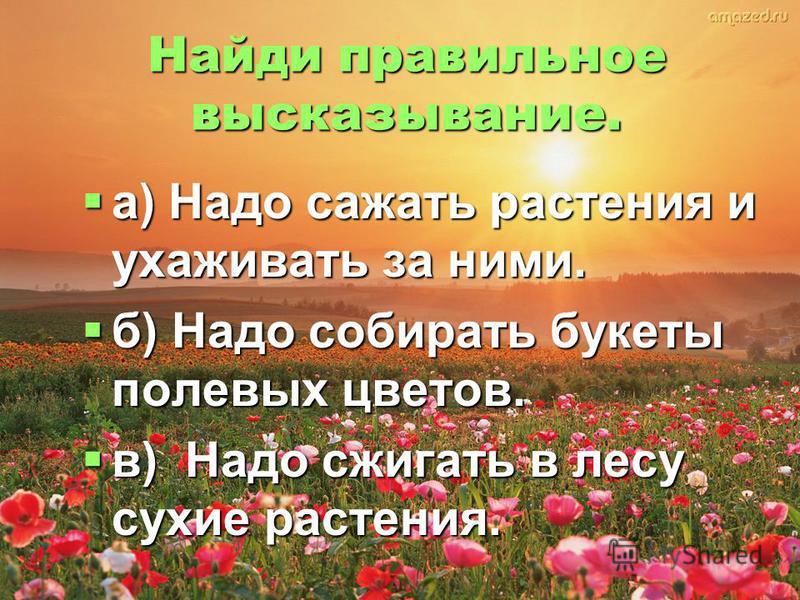 Найди правильное высказывание. а) Надо сажать растения и ухаживать за ними. б) Надо собирать букеты полевых цветов. в) Надо сжигать в лесу сухие растения.