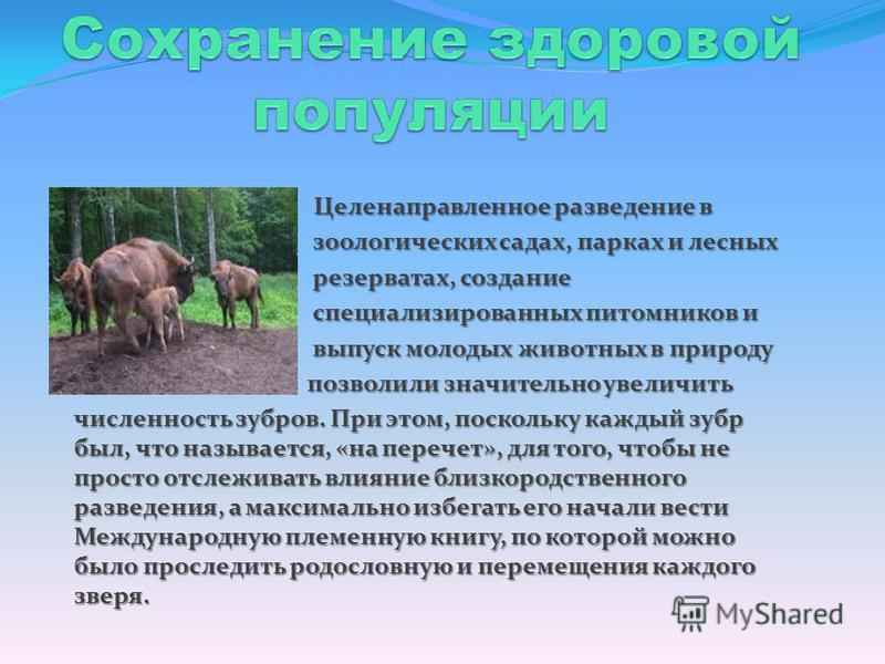 Целенаправленное разведение в зоологических садах, парках и лесных зоологических садах, парках и лесных резерватах, создание резерватах, создание специализированных питомников и специализированных питомников и выпуск молодых животных в природу выпуск