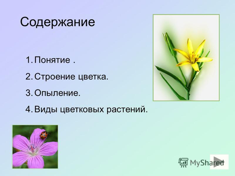 Учитель: Филиппова С. М.