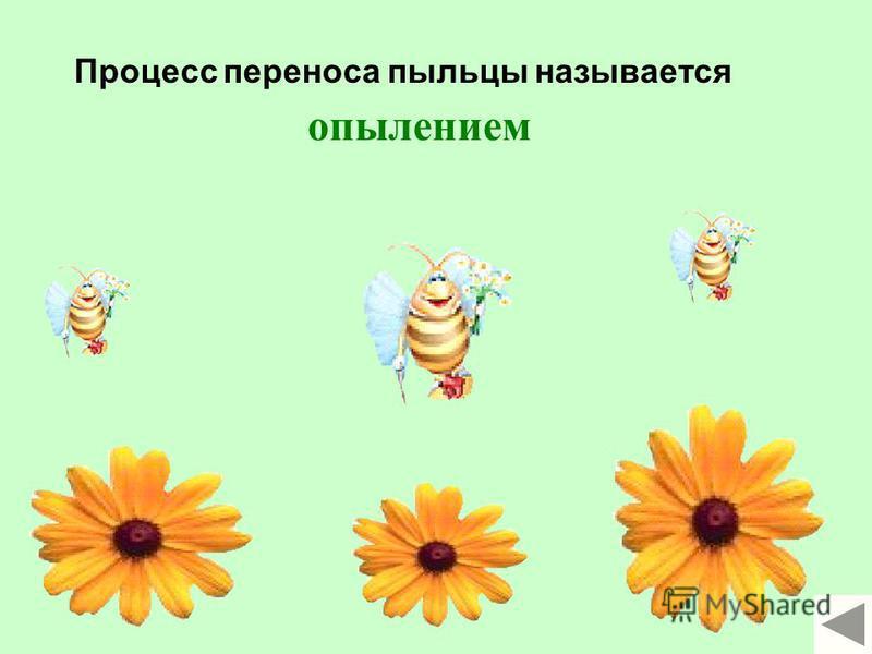Лепесток Пестик Тычинка Пыльник Тычиночная нить Рыльце Столбик Завязь