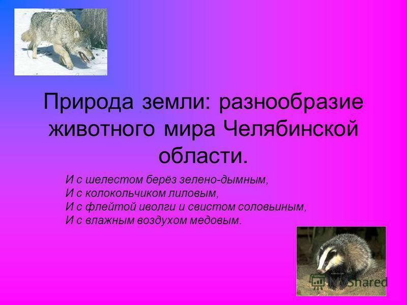 Природа земли: разнообразие животного мира Челябинской области. И с шелестом берёз зелено-дымным, И с колокольчиком лиловым, И с флейтой иволги и свистом соловьиным, И с влажным воздухом медовым.