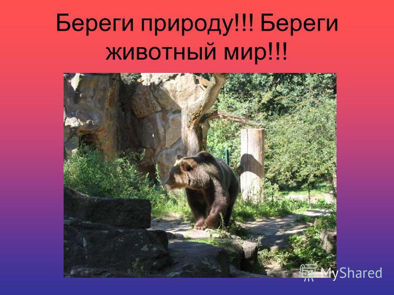 Береги природу!!! Береги животный мир!!!