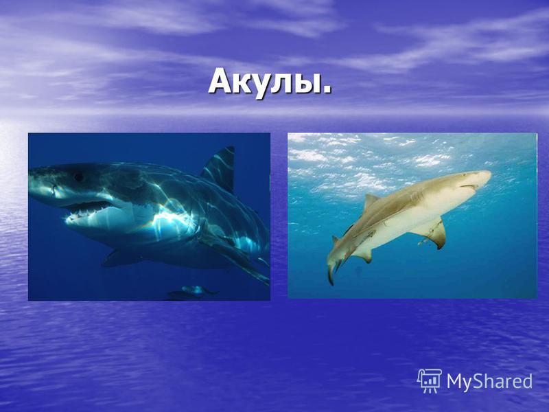 Акулы.