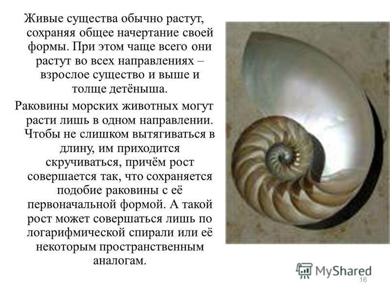 Живые существа обычно растут, сохраняя общее начертание своей формы. При этом чаще всего они растут во всех направлениях – взрослое существо и выше и толще детёныша. Раковины морских животных могут расти лишь в одном направлении. Чтобы не слишком выт