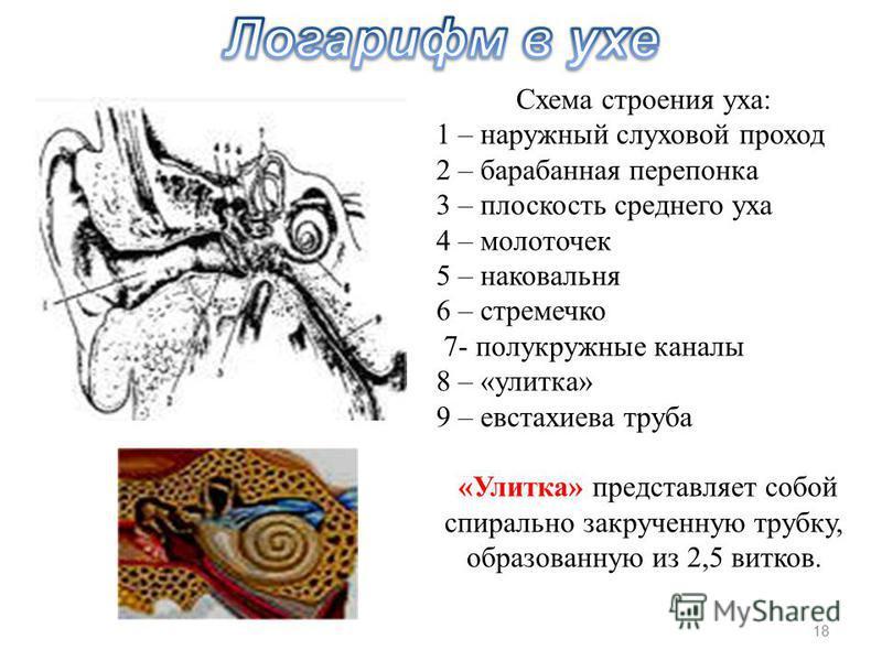 Схема строения уха: 1 – наружный слуховой проход 2 – барабанная перепонка 3 – плоскость среднего уха 4 – молоточек 5 – наковальня 6 – стремечко 7- полукружные каналы 8 – «улитка» 9 – евстахиева труба «Улитка» представляет собой спирально закрученную