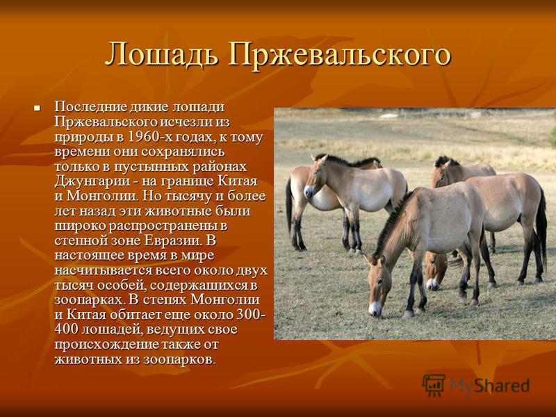 Лошадь Пржевальского Последние дикие лошади Пржевальского исчезли из природы в 1960-х годах, к тому времени они сохранялись только в пустынных районах Джунгарии - на границе Китая и Монголии. Но тысячу и более лет назад эти животные были широко распр