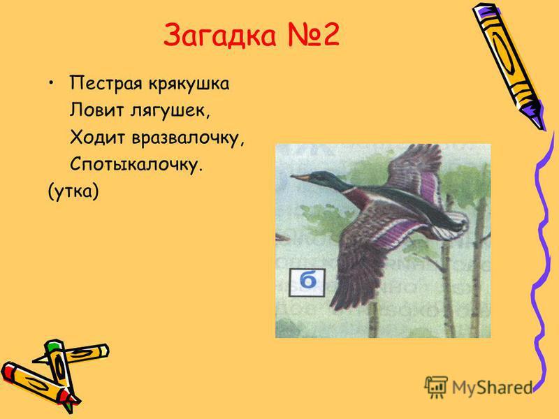 Загадка 2 Пестрая крякушка Ловит лягушек, Ходит вразвалочку, Спотыкалочку. (утка)