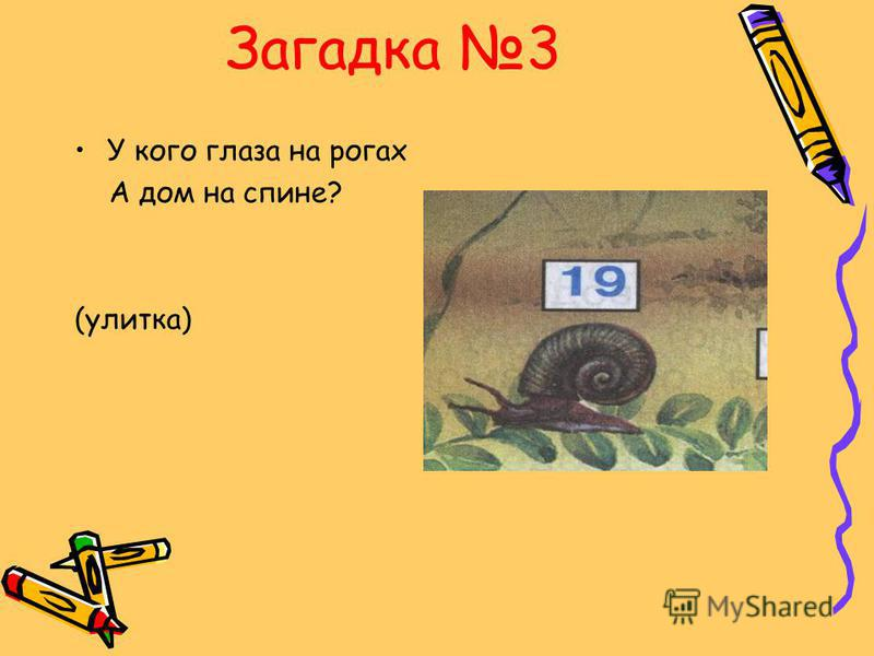 Загадка 3 У кого глаза на рогах А дом на спине? (улитка)