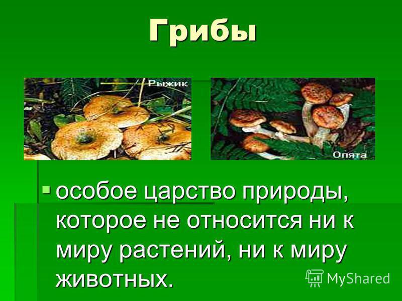 Грибы особое царство природы, которое не относится ни к миру растений, ни к миру животных. особое царство природы, которое не относится ни к миру растений, ни к миру животных.