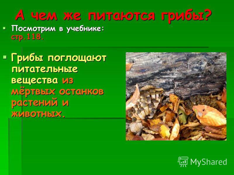 А чем же питаются грибы? Посмотрим в учебнике: стр.118. Грибы поглощают питательные вещества из мёртвых останков растений и животных.