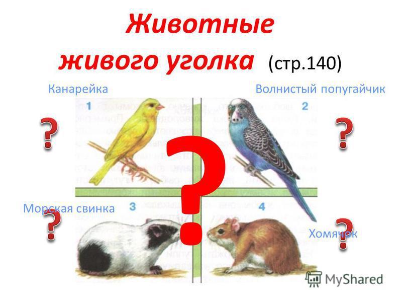 Животные живого уголка 2 класс презентация