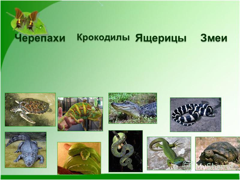 Черепахи КрокодилыЯщерицы Змеи
