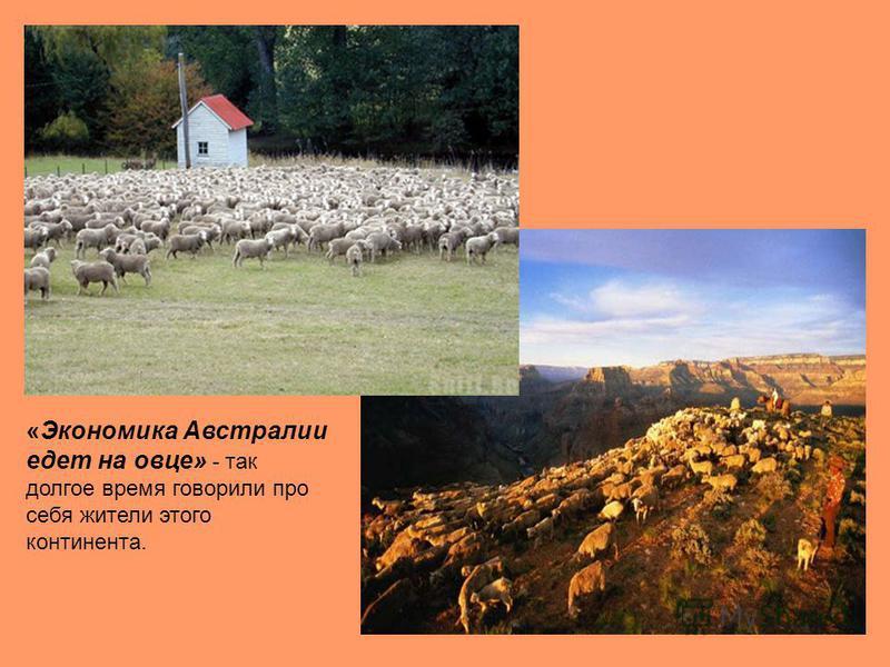 «Экономика Австралии едет на овце» - так долгое время говорили про себя жители этого континента.