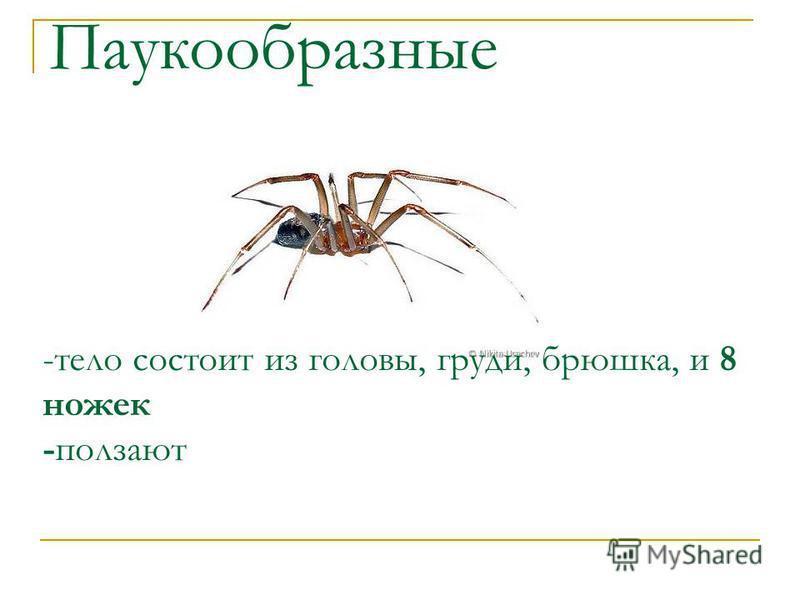 Паукообразные -тело состоит из головы, груди, брюшка, и 8 ножек -ползают