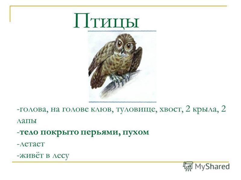 -голова, на голове клюв, туловище, хвост, 2 крыла, 2 лапы -тело покрыто перьями, пухом -летает -живёт в лесу Птицы