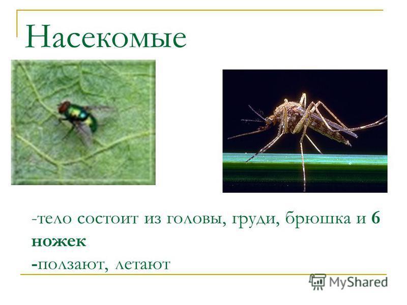 Насекомые -тело состоит из головы, груди, брюшка и 6 ножек -ползают, летают