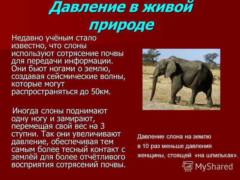 Давление в живой природе Недавно учёным стало известно, что слоны используют сотрясение почвы для передачи информации. Они бьют ногами о землю, создавая сейсмические волны, которые могут распространяться до 50 км. Недавно учёным стало известно, что с