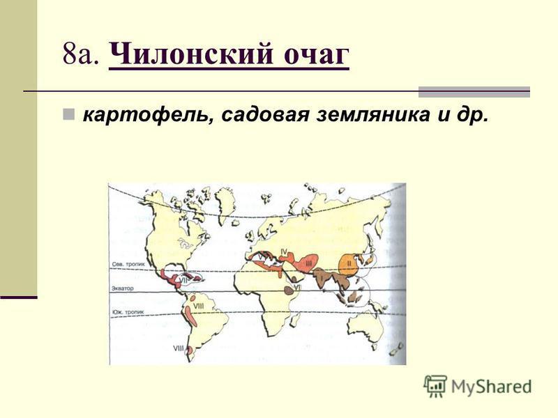 8 а. Чилонский очаг картофель, садовая земляника и др.