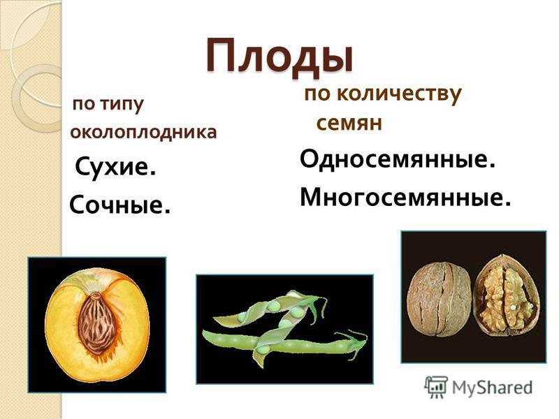 Плоды по типу околоплодника Сухие. Сочные. по количеству семян Односемянные. Многосемянные.