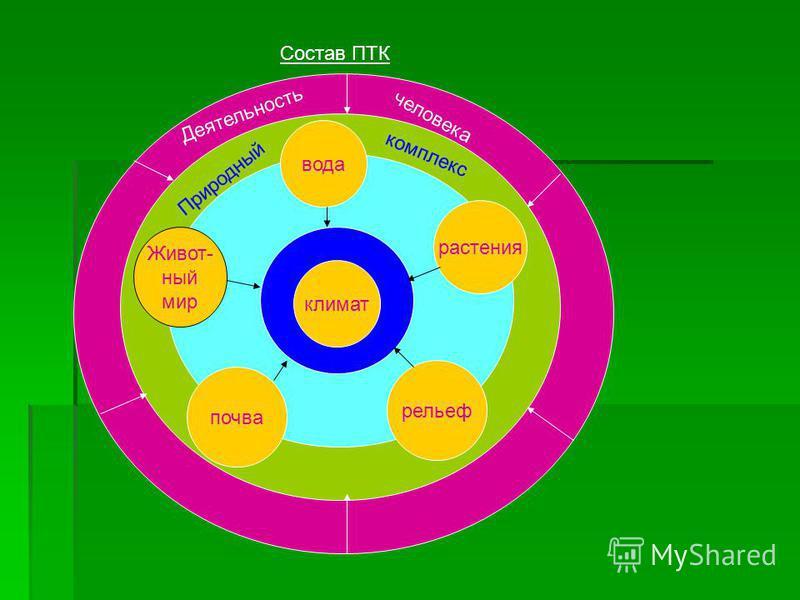 Состав ПТК Деятельность человека Природный комплекс климат вода растения рельеф почва Живот- ный мир
