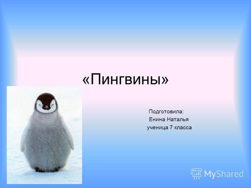 «Пингвины» Подготовила: Енина Наталья ученица 7 класса
