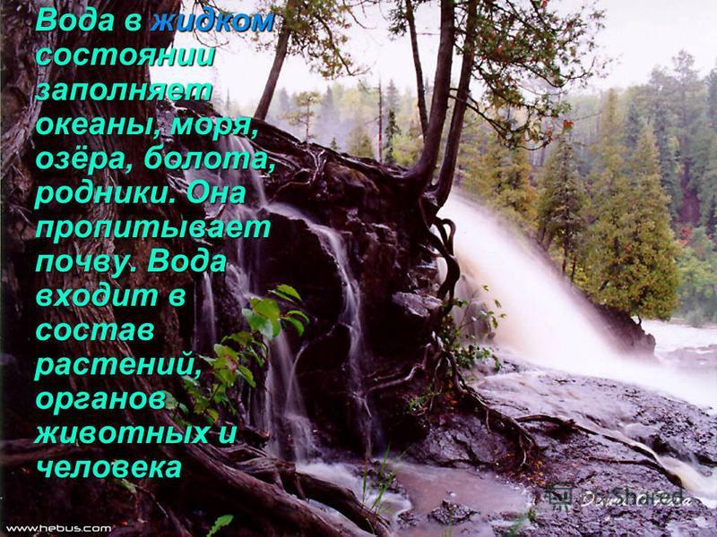 Вода в жидком состоянии заполняет океаны, моря, озёра, болота, родники. Она пропитывает почву. Вода входит в состав растений, органов животных и человека