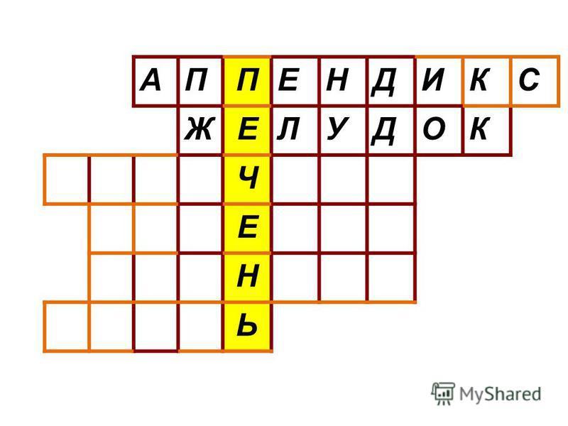 АППЕНДИКС ЖЕЛУДОК Ч Е Н Ь